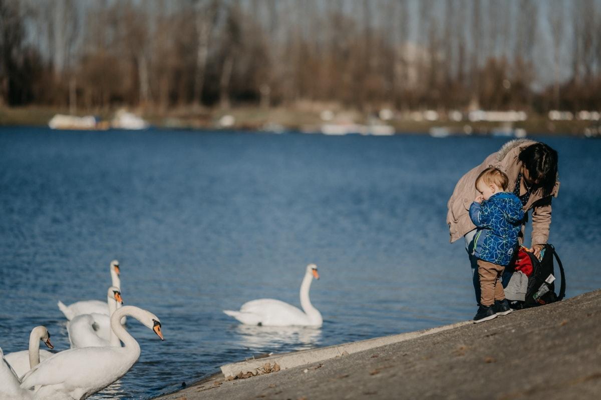mother, son, enjoying, lakeside, swan, birds, beach, bird, waterfowl, water