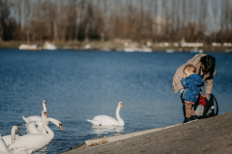 mother, son, enjoying, lakeside, swan, birds, beach, bird, waterfowl, water