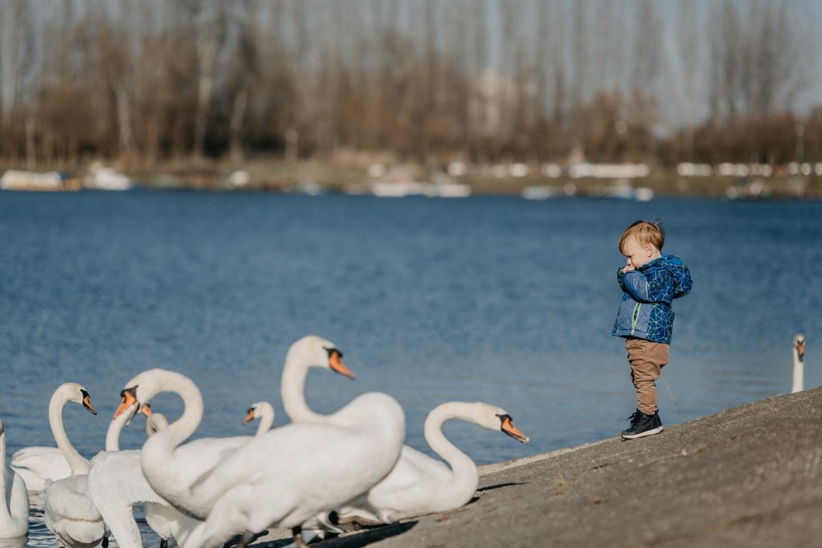 baby, boy, toddler, swan, lakeside, winter, bird, water, beak, feather
