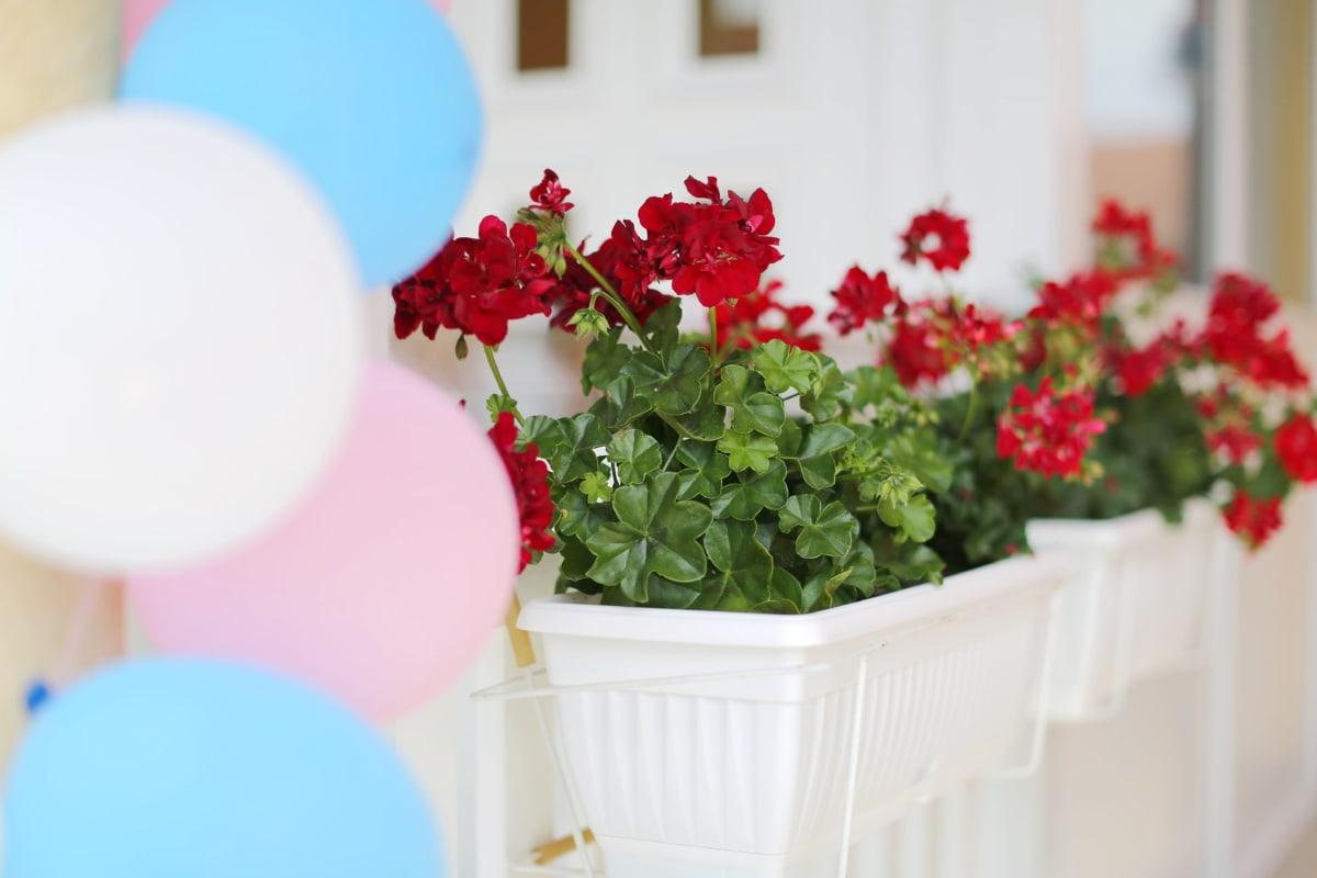 géranium, parti, ballon, pot de fleurs, élégant, fleur, été, feuille, à l'intérieur, flore