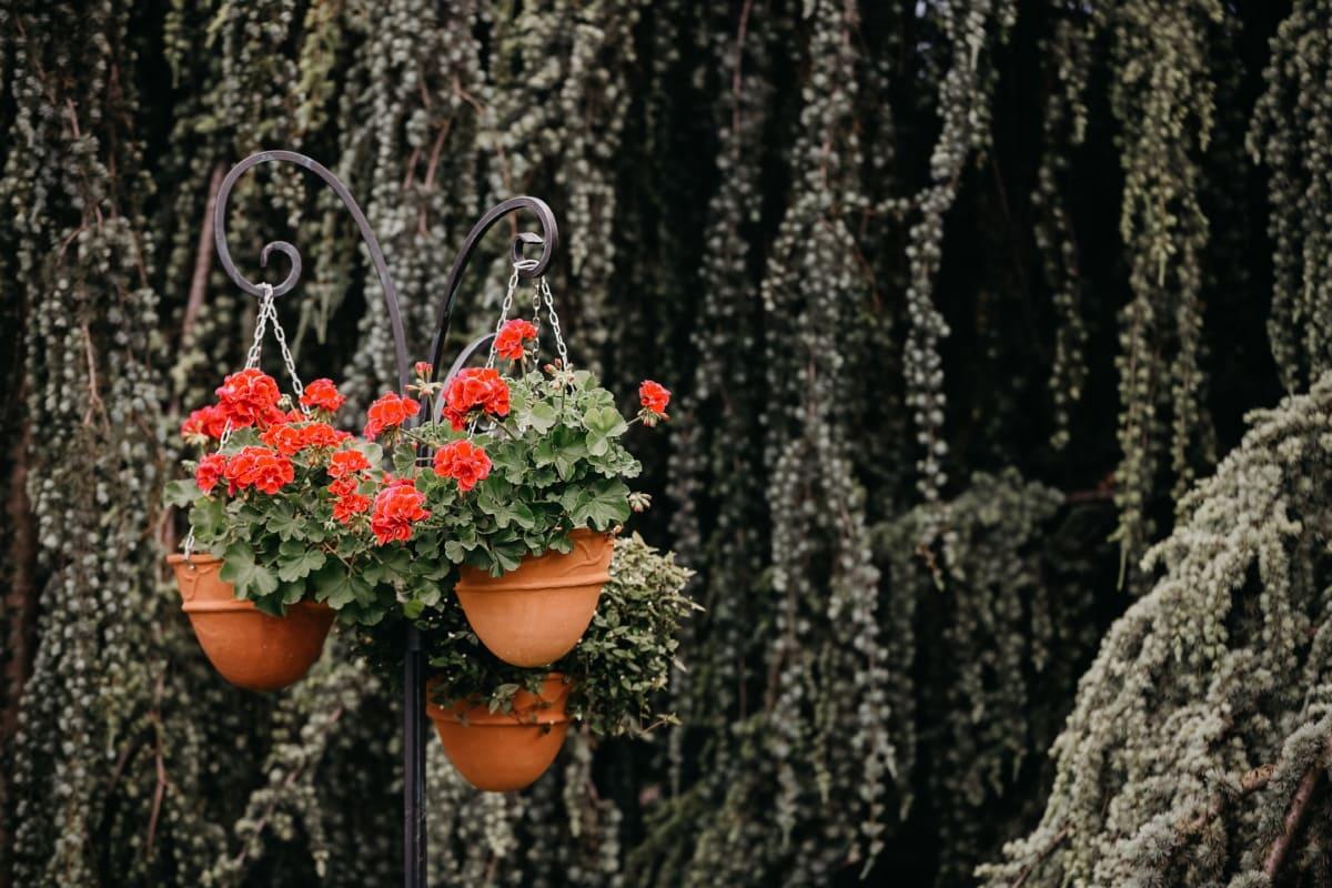 géranium, jardin fleuri, suspendu, pot de fleurs, arbre, jardin, fleur, feuille, flore, nature