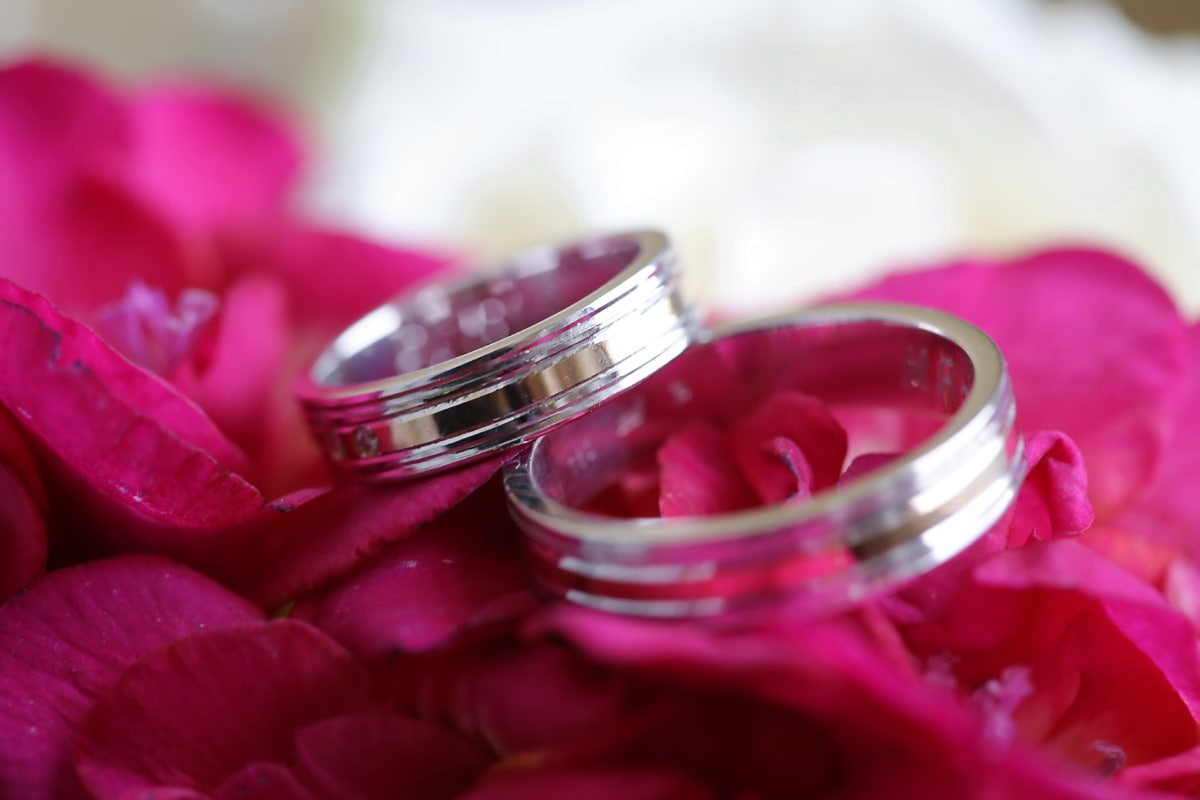 macro, anneaux, bague de mariage, pétales, rosâtre, fleur, amour, romance, Rose, à l'intérieur