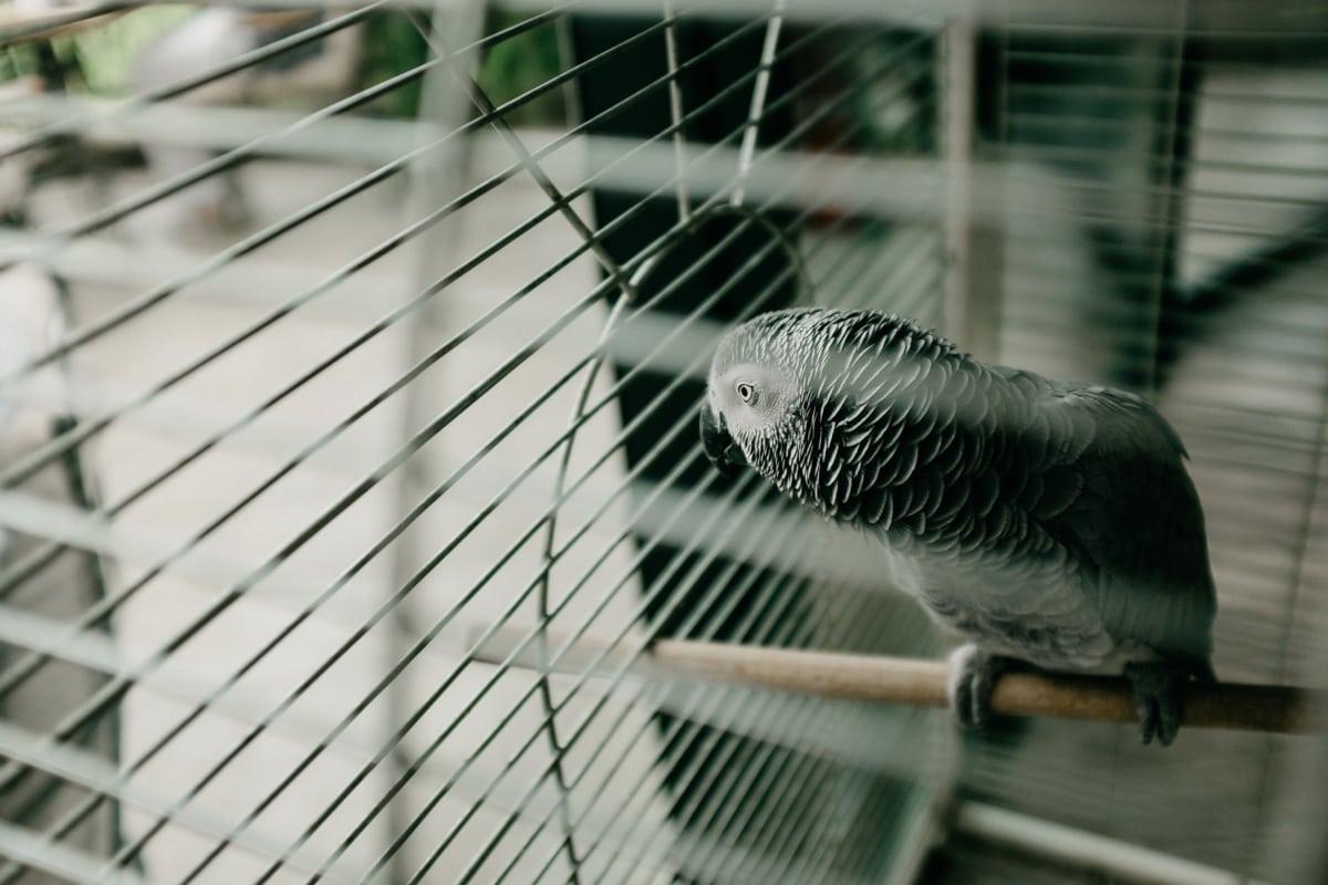 perroquet, oiseau, cage, clôture, panache, fil, en acier, nature, brouiller, animal