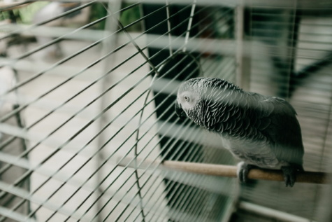 parrot, bird, cage, fence, feather, wire, steel, nature, blur, animal