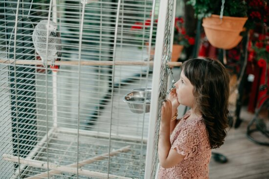 pretty girl, exhilaration, cage, pet, animal, parrot, girl, pretty, young, fun