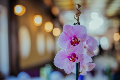 flowers, orchid, pinkish, interior decoration, flower, pink, elegant, beautiful, blur, tropical