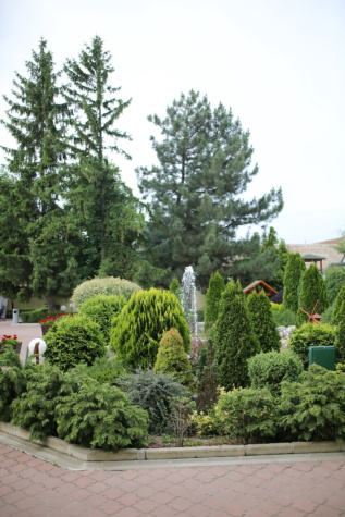 fontána, ihličnany, Záhrada, Botanická, Príroda, strom, rastlín, park, drevo, krídlo