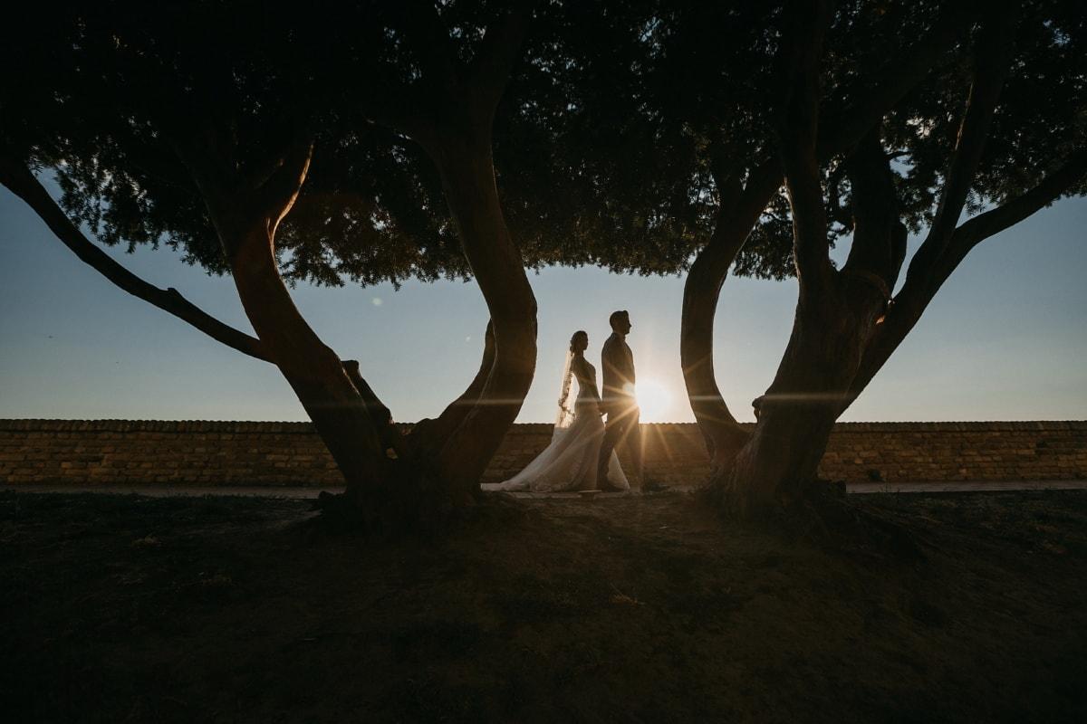marche, coucher de soleil, tout juste marié, taches solaires, ombre, rayons de soleil, aube, arbre, rétro-éclairé, paysage