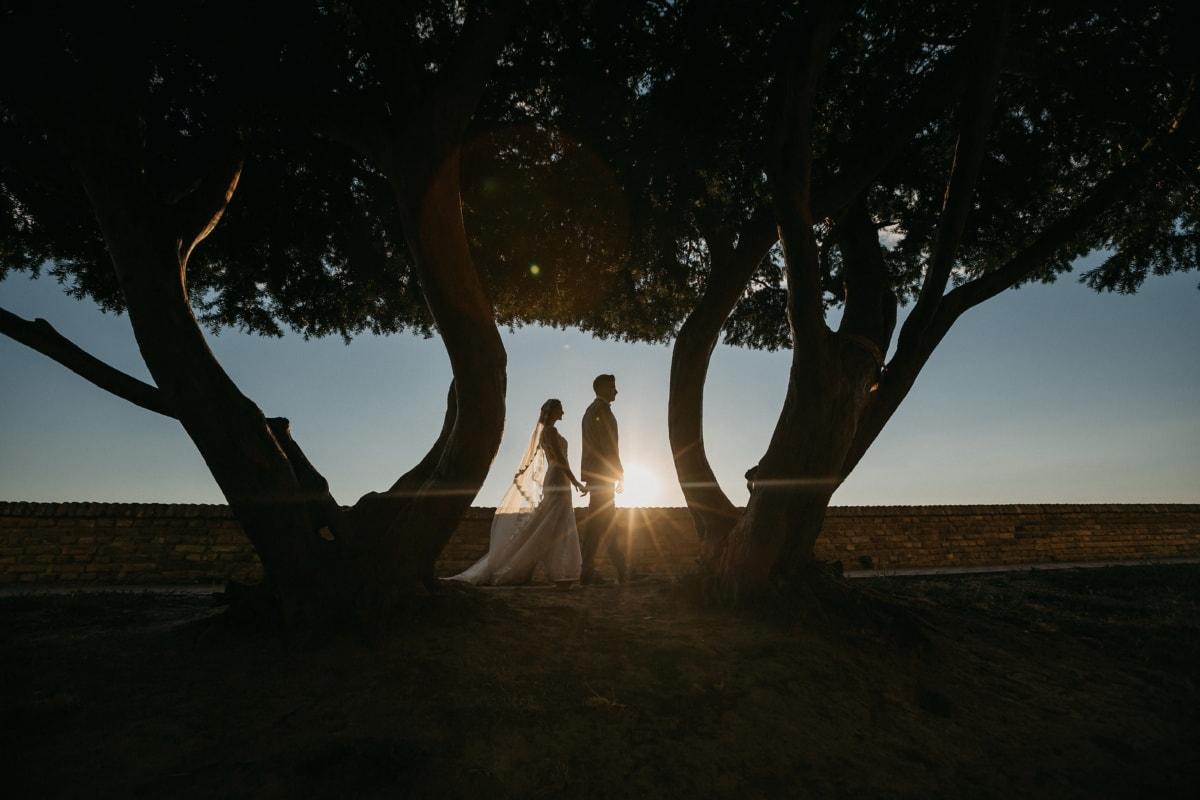 bruden, brudgommen, nygifte, solflekk, gå, solnedgang, silhuett, treet, daggry, bakbelysning