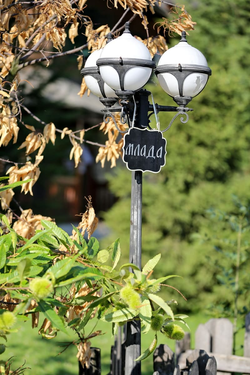lamp, street, sign, tree, nature, hanging, leaf, outdoors, summer, lantern