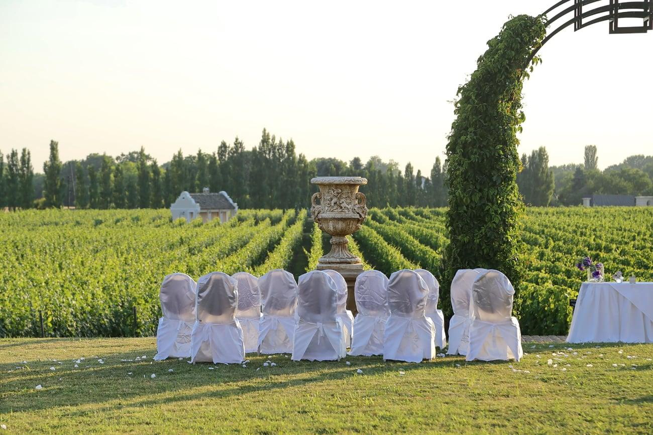 Hochzeitsort, Weinberg, Landwirtschaft, Ackerland, Jahrgang, des ländlichen Raums, Gras, im freien, Garten, Menschen