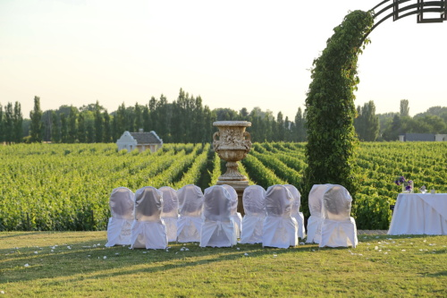 wedding venue, vineyard, agriculture, farmland, vintage, rural, grass, outdoors, garden, people