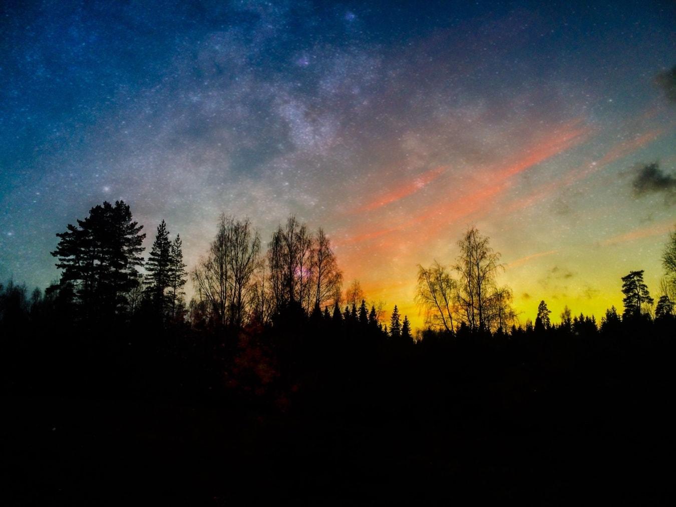 식물, 자정, 밤, 숲, 실루엣, 풍경, 조명, 태양, 스타, 분위기