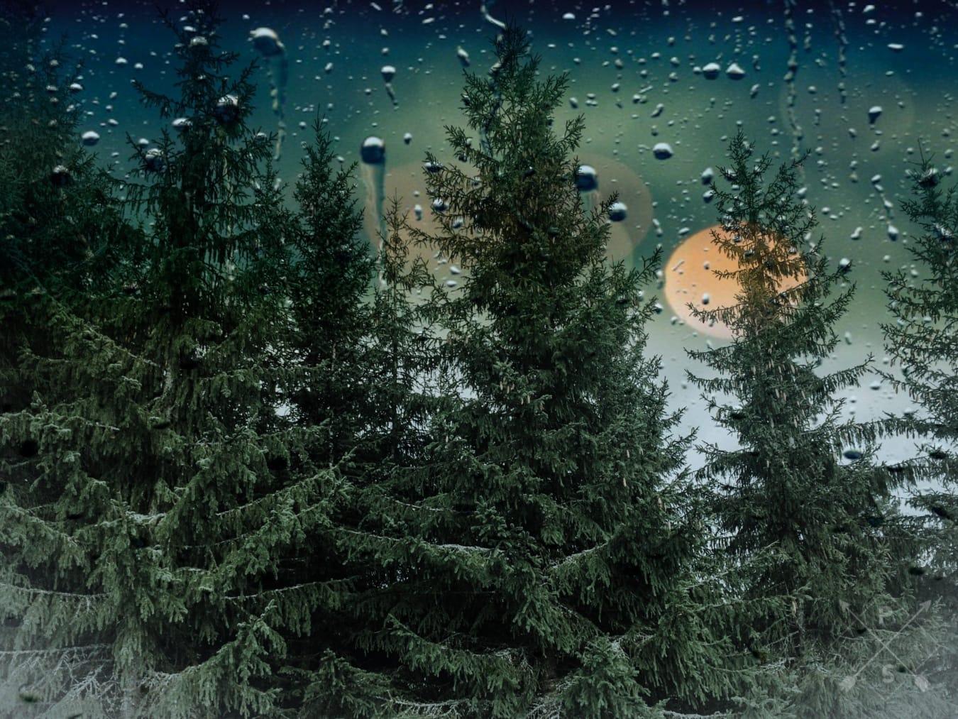 goutte de pluie, pluie, fenêtre, arbres, conifères, Evergreen, Wet, humidité, arbre, nature
