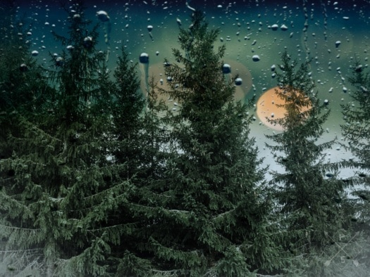 raindrop, rain, window, trees, conifers, evergreen, wet, moisture, tree, nature