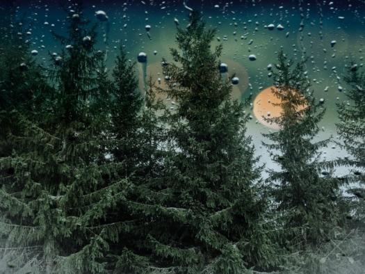 dažďová kvapka, dážď, okno, stromy, ihličnany, vždy zelená, mokré, vlhkosť, strom, príroda