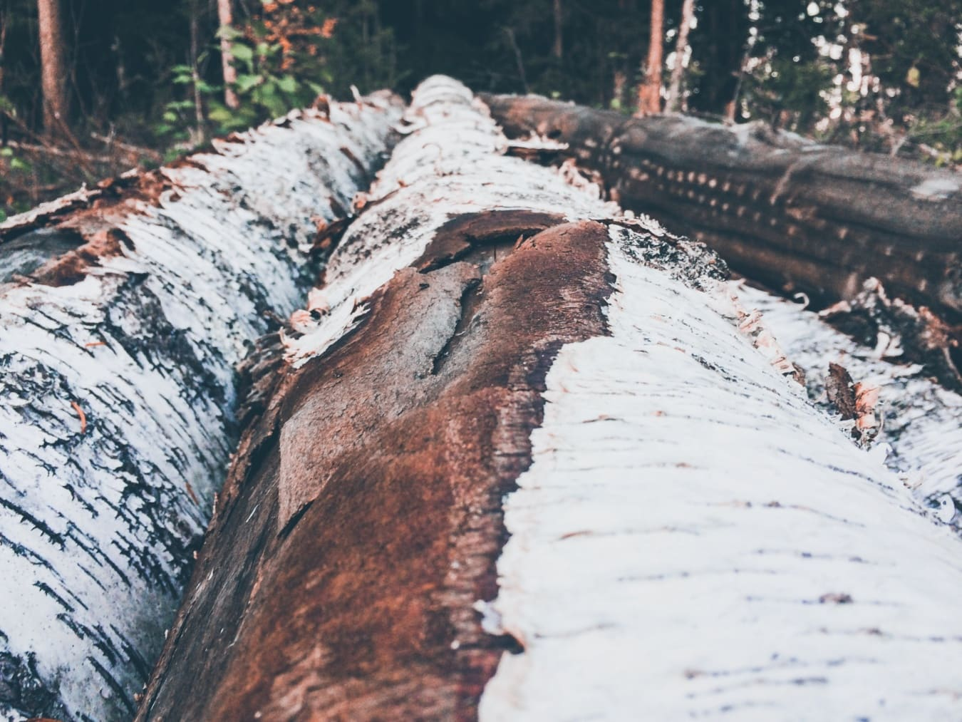 écorce, cortex, fermer, arbres, paysage, nature, à l'extérieur, arbre, environnement, bois