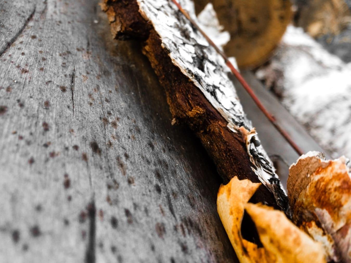 feuilles jaunes, brun jaunâtre, surface, cortex, arbre, fermer, bois, nature, vieux, sombre