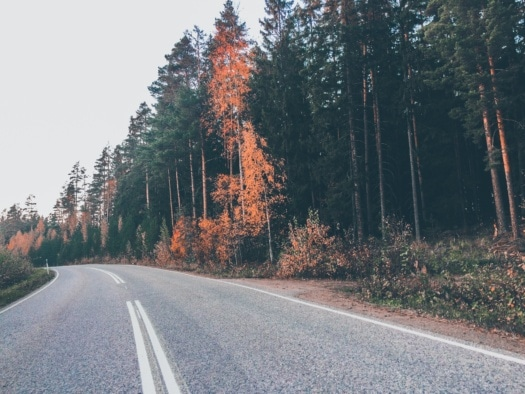 road, asphalt, countryside, highway, trees, conifers, landscape, tree, forest, wood