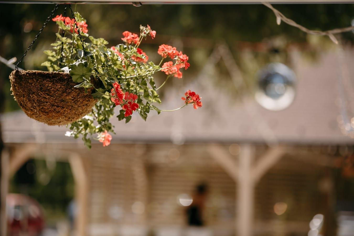 pot de fleurs, géranium, décoration, suspendu, fleur, branche, rue, été, à l'extérieur, jardin