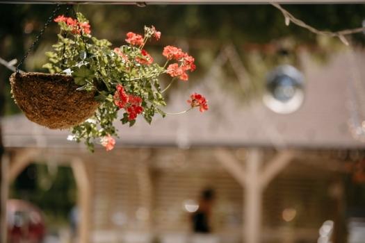 vaso de flor, gerânio, decoração, de suspensão, flor, ramo, rua, verão, ao ar livre, jardim