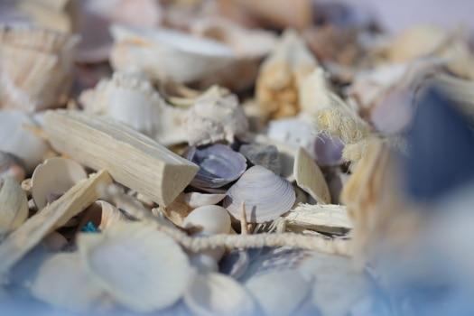 seashell, details, many, shell, blur, traditional, merchandise, dry, horizontal, invertebrate