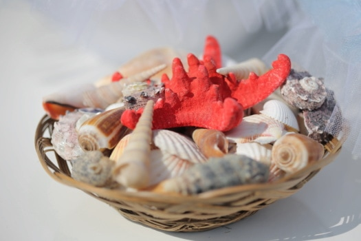 seashell, details, wicker basket, close-up, traditional, still life, shellfish, basket, conch, mollusk