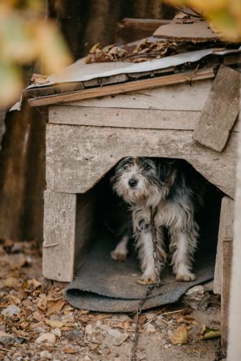 Knírač malý, zvíře, pes, přístřešek, řetěz, čistokrevná, lovecký pes, opuštěné, fajn, dřevo