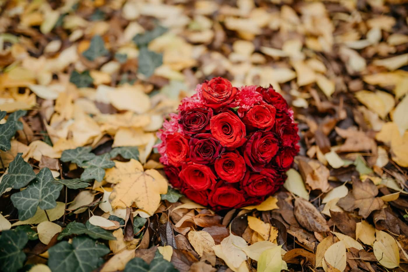 жълти листа, есенния сезон, бръшлян, червен, рози, букет, подаръци, Роза, листа, Любов