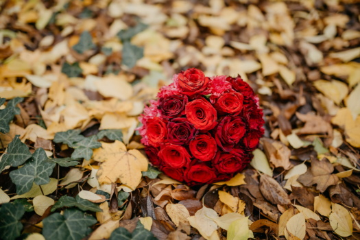 yellow leaves, autumn season, ivy, red, roses, bouquet, gifts, rose, leaf, love