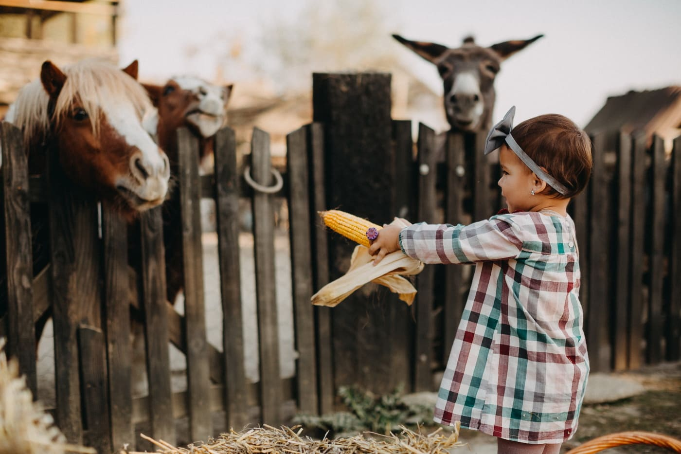djetinjstvo, lijepa djevojka, zabava, poljoprivredno zemljište, životinje, konji, magarac, seoska kuća, dijete, farma