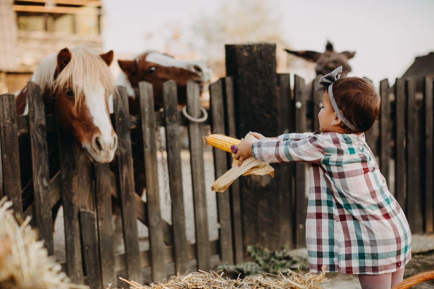 ребенок, питание, лошади, Ранчо, сарай, ферма, кавалерия, забор, сельских районах, на открытом воздухе