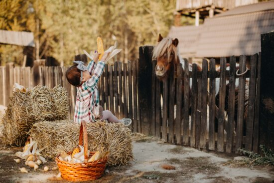 scene, pretty girl, horse, hay, barn, girl, village, countryside, people, straw