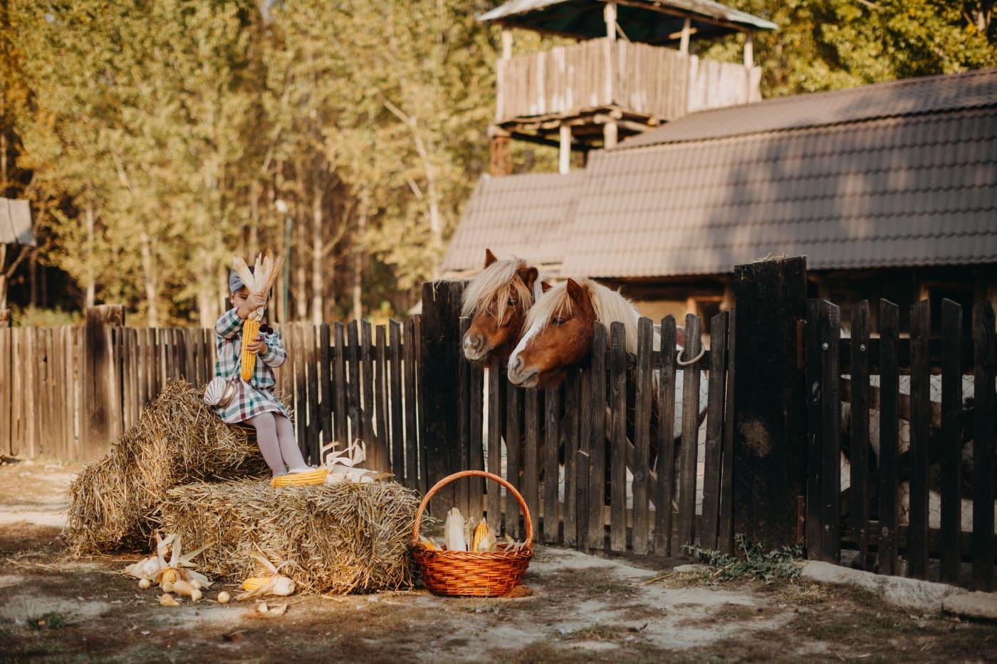 Landwirtschaft, untergeordnete, Bauernhaus, Ranch, Heuhaufen, Tiere, Hay, Pferde, Scheune, Holz