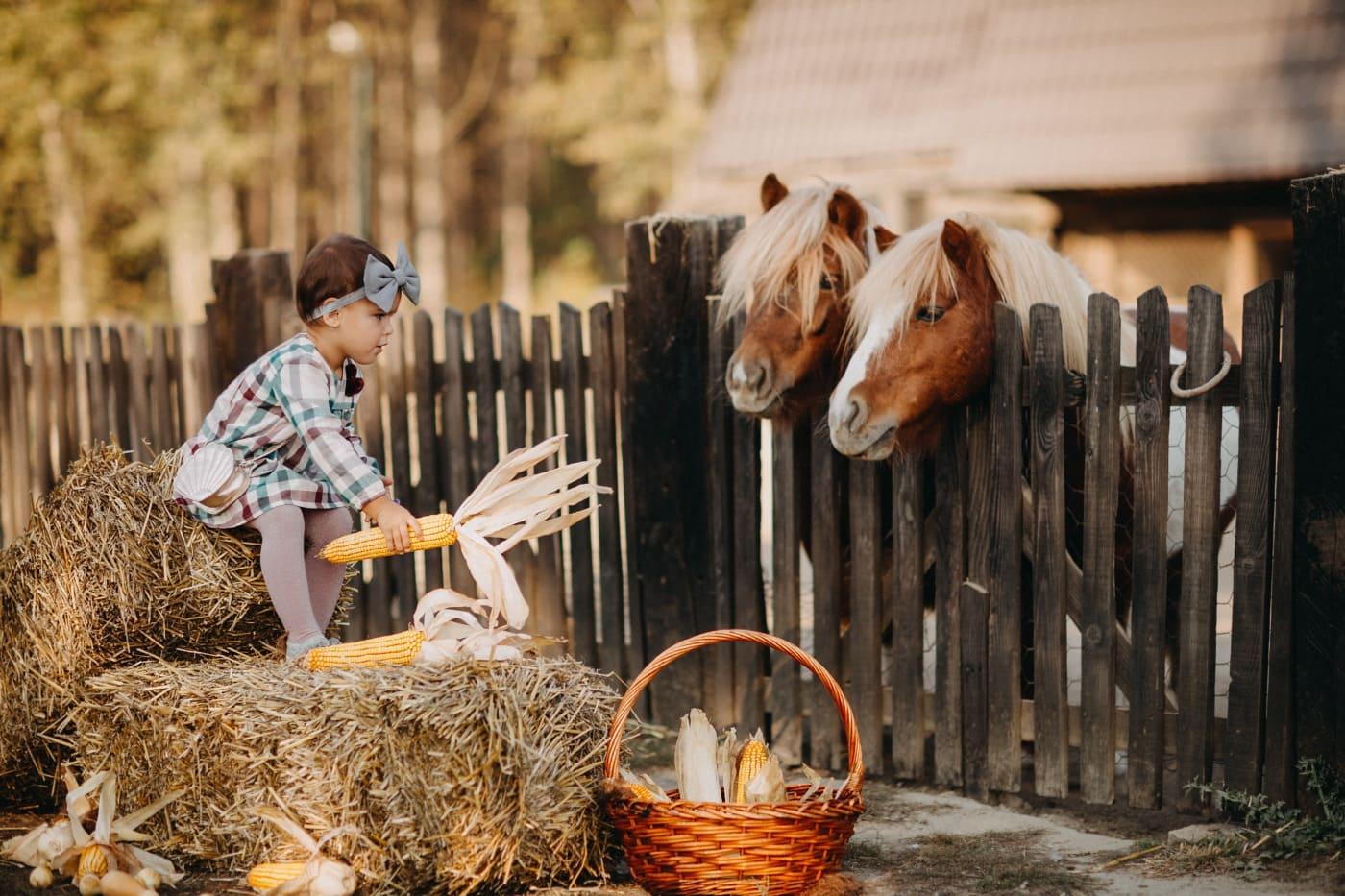 child, pretty girl, girl, horses, village, feeding, corn, barn, hay, farm