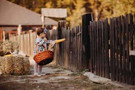 adorable, child, countryside, village, picket fence, wicker basket, people, fence, wood, outdoors
