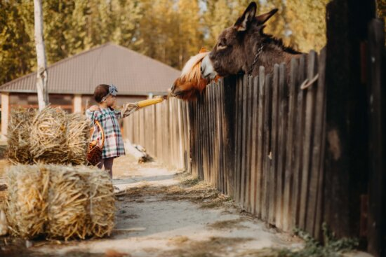 child, girl, donkey, horse, wicker basket, feeding, animals, corn, villager, village