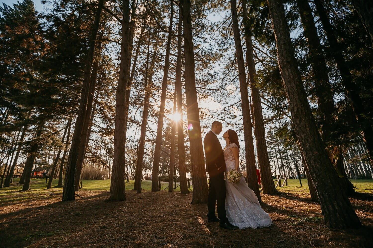 sunset, bride, romantic, groom, forest, love date, backlight, park, wedding, wood