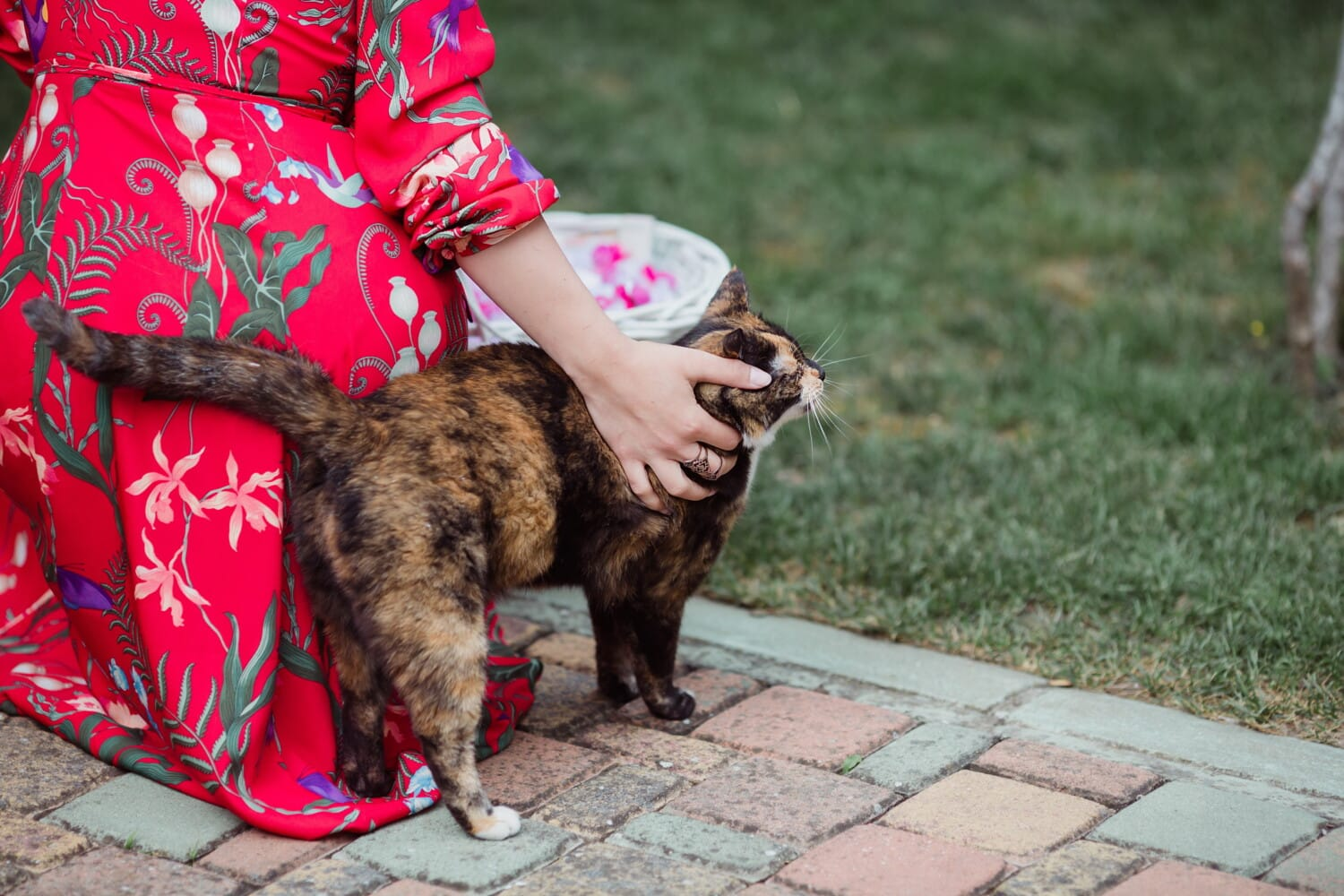 domestic cat, pet, woman, hand, cute, animal, cat, young, portrait, puppy