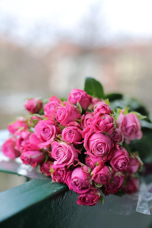 bouquet, arrangement, pink, decoration, leaf, roses, flower, nature, rose, blooming