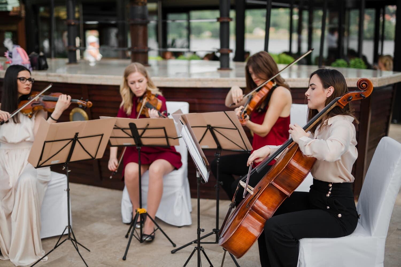 Orchestre, femmes, classique, musique, musicien, Alto, violon, instrument, gens, concert