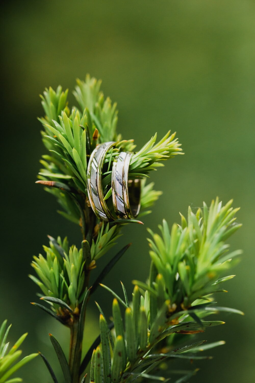 branches, arbre, anneaux, bijoux, platinum, Or, plante, brouiller, herbe, Evergreen