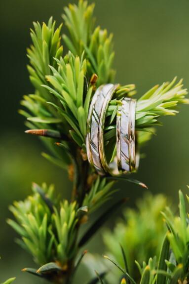 shining, rings, gold, hanging, wedding ring, blur, plant, nature, evergreen, herb