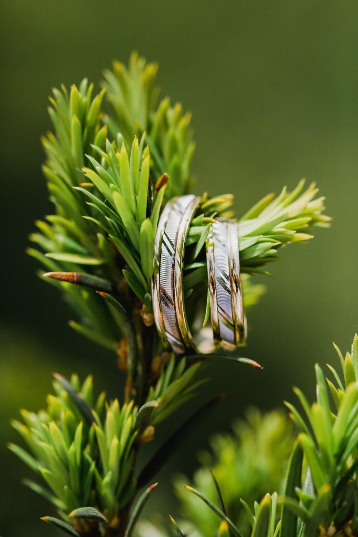 anneaux, brillante, bijoux, en détail, conifères, branches, Evergreen, plante, brouiller, herbe