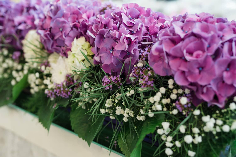 bouquet, hortensia, fleurs, pot de fleurs, arbuste, nature, plante, cluster, flore, fleur