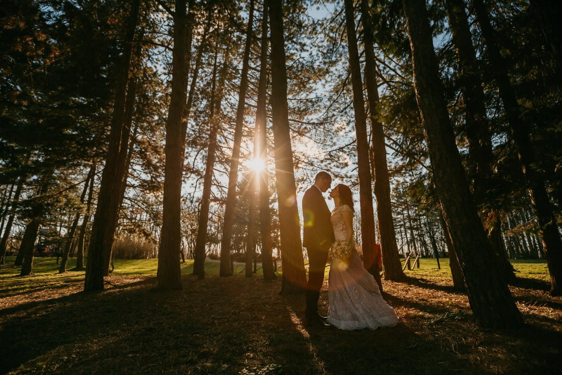 sunrise, groom, sunrays, bride, forest, morning, trees, dawn, tree, wedding