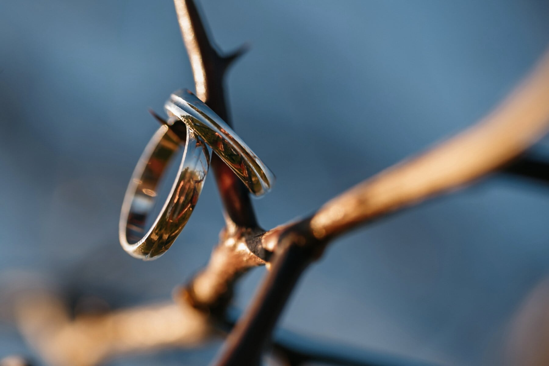 metallic, jewelry, rings, thorn, blur, outdoors, wood, nature, still life, focus