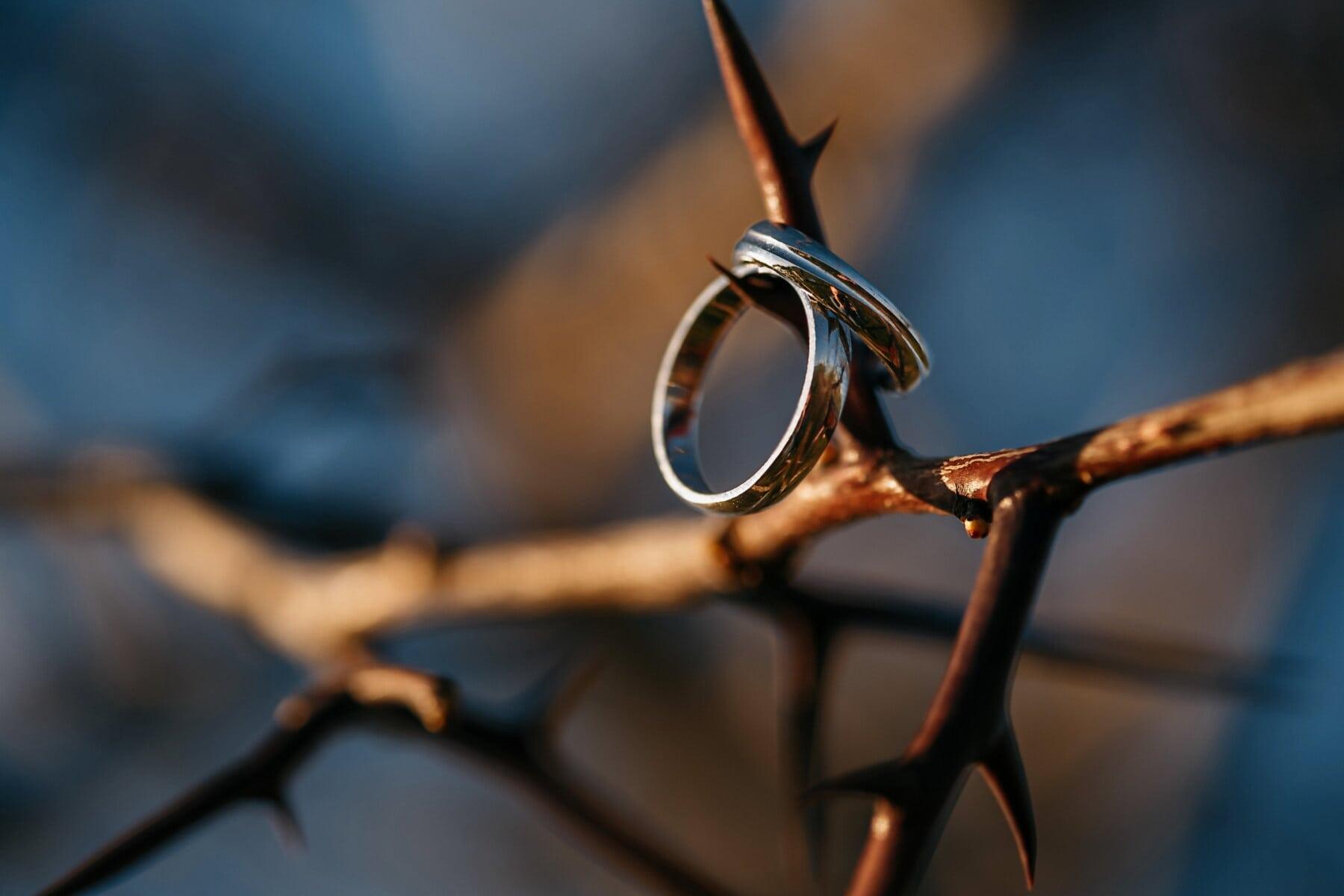 acacia, platinum, thorn, rings, romantic, sharp, blur, wood, outdoors, nature