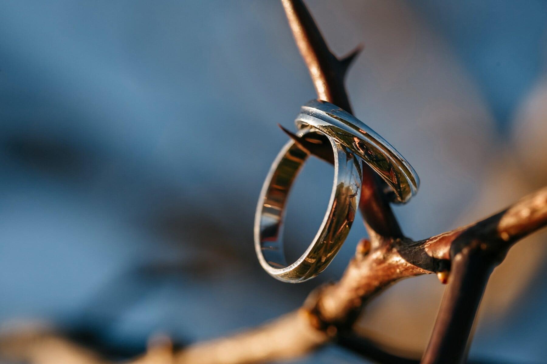 branche, bague de mariage, bijoux, épine, anneaux, Acacia pycnantha, Or, lueur dorée, brouiller, à l'extérieur