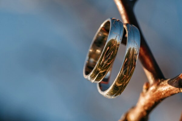 pair, rings, platinum, sunrays, metal, branches, golden shine, reflection, close-up, wedding